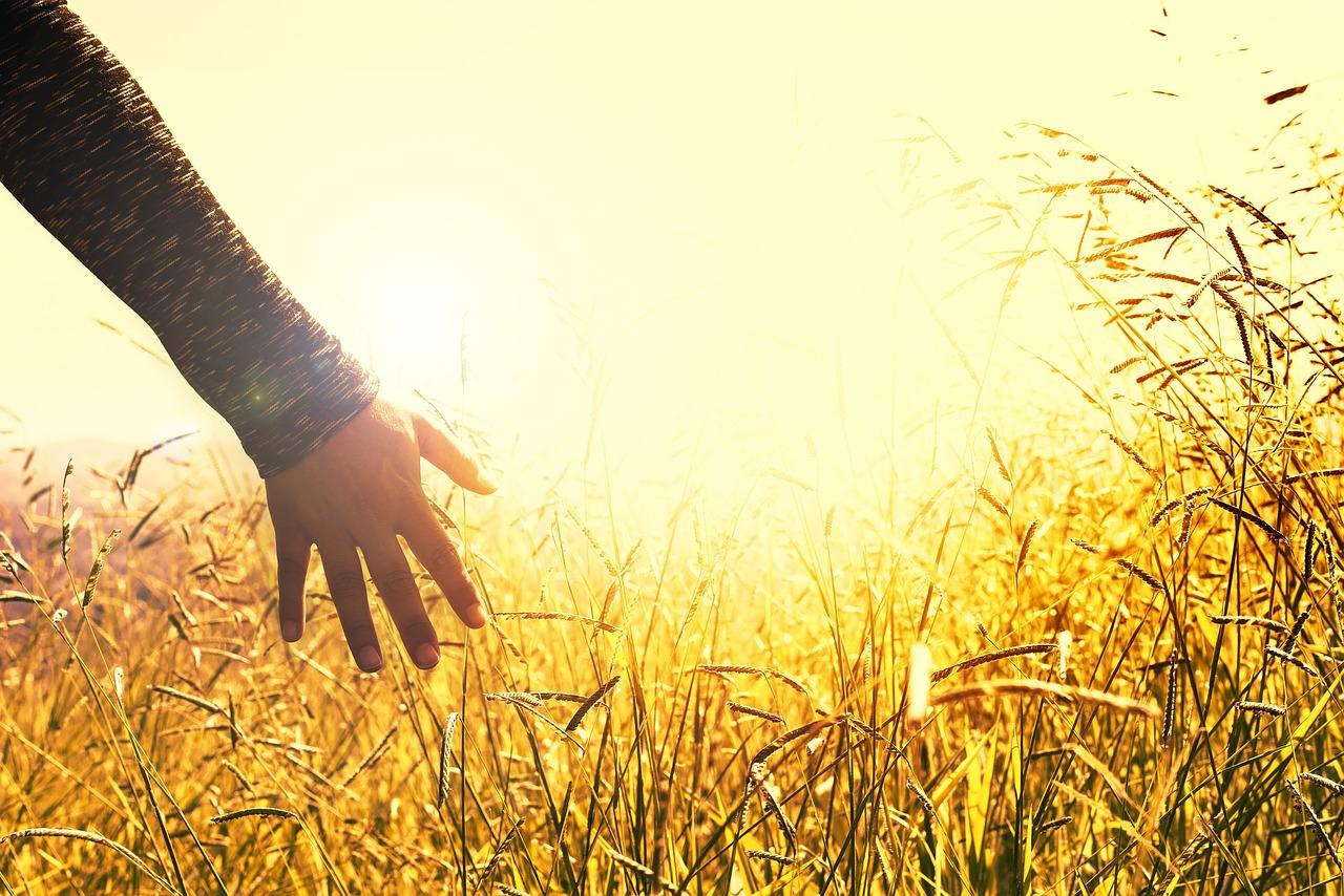 Carpe diem: conheça 5 formas de aproveitar o dia 4